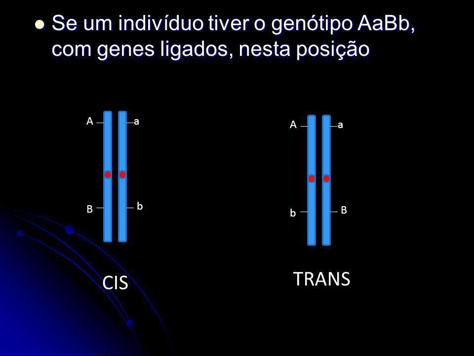 Se um indivíduo tiver o genótipo AaBb, com genes ligados, nesta posição Se um indivíduo tiver o genótipo AaBb, com genes ligados, nesta posição Aa B b