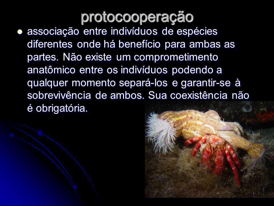 protocooperação associação entre indivíduos de espécies diferentes onde há benefício para ambas as partes.