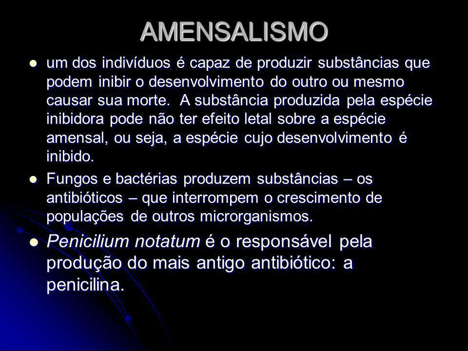 AMENSALISMO um dos indivíduos é capaz de produzir substâncias que podem inibir o desenvolvimento do outro ou mesmo causar sua morte.