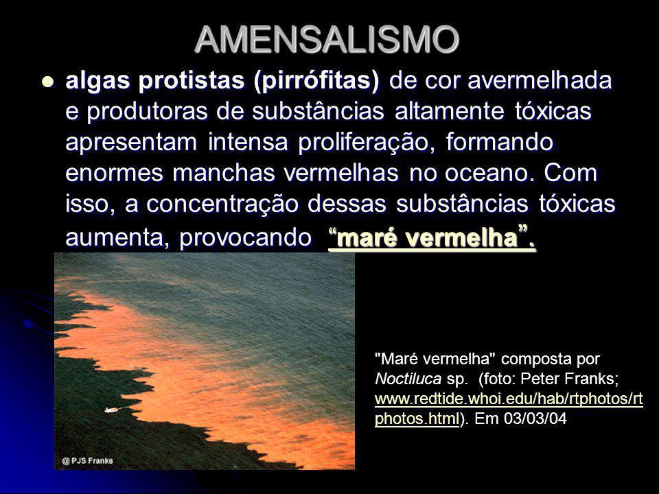 AMENSALISMO algas protistas (pirrófitas) de cor avermelhada e produtoras de substâncias altamente tóxicas apresentam intensa proliferação, formando enormes manchas vermelhas no oceano.