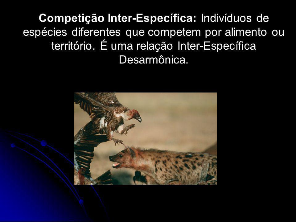 Competição Inter-Específica: Indivíduos de espécies diferentes que competem por alimento ou território.