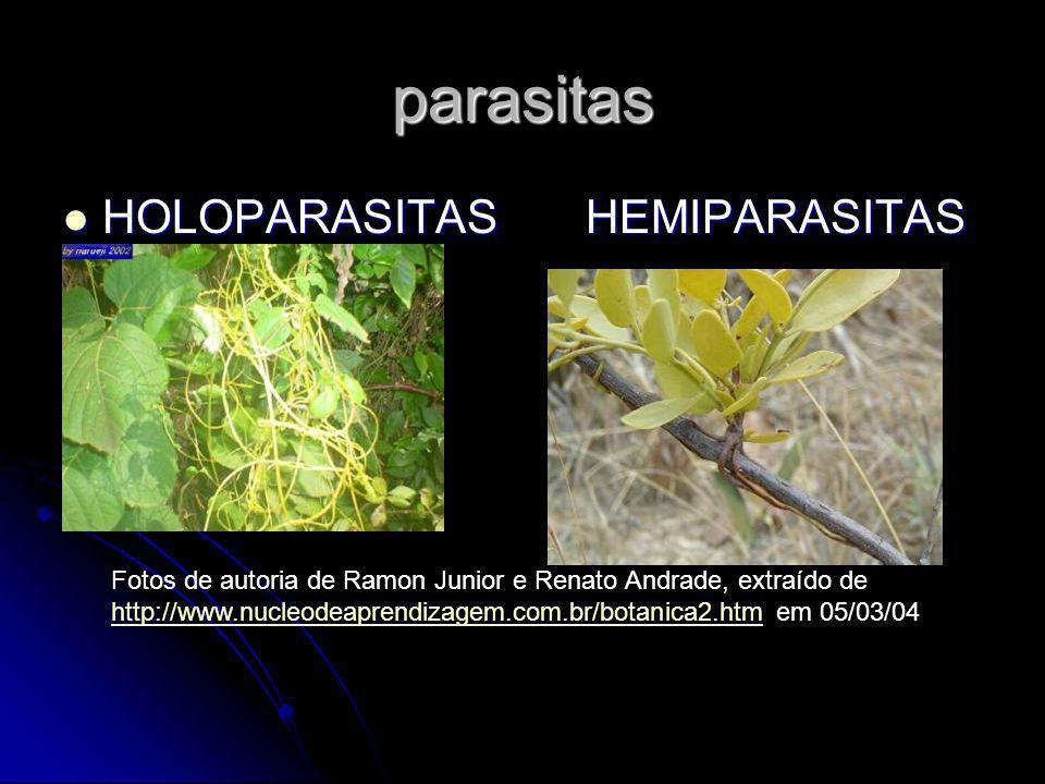 parasitas HOLOPARASITASHEMIPARASITAS HOLOPARASITASHEMIPARASITAS Fotos de autoria de Ramon Junior e Renato Andrade, extraído de http://www.nucleodeaprendizagem.com.br/botanica2.htmhttp://www.nucleodeaprendizagem.com.br/botanica2.htm em 05/03/04