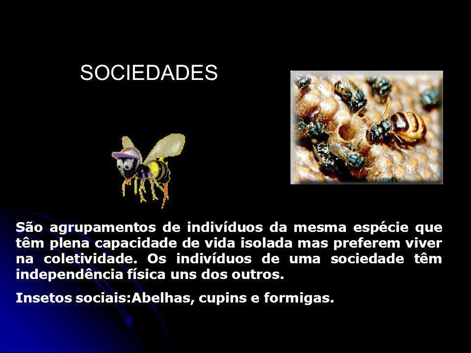 SOCIEDADES São agrupamentos de indivíduos da mesma espécie que têm plena capacidade de vida isolada mas preferem viver na coletividade.