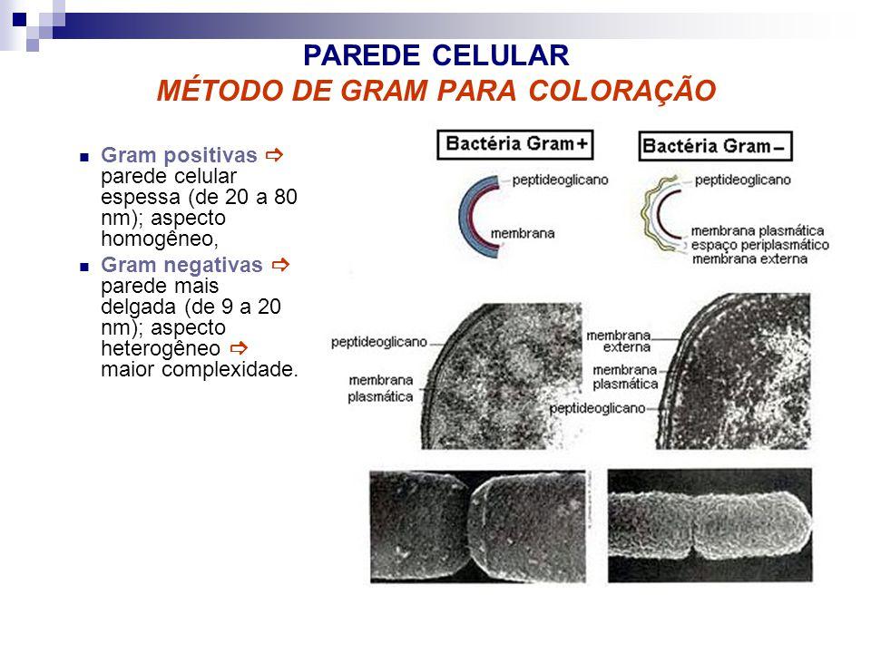 PAREDE CELULAR MÉTODO DE GRAM PARA COLORAÇÃO Gram positivas parede celular espessa (de 20 a 80 nm); aspecto homogêneo, Gram negativas parede mais delg