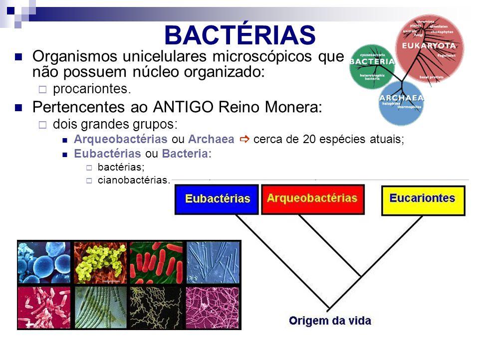 BACTÉRIAS Organismos unicelulares microscópicos que não possuem núcleo organizado: procariontes. Pertencentes ao ANTIGO Reino Monera: dois grandes gru