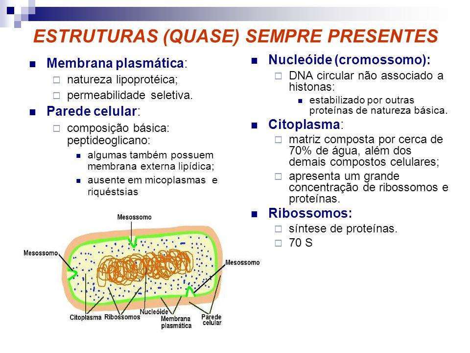 ESTRUTURAS (QUASE) SEMPRE PRESENTES Membrana plasmática: natureza lipoprotéica; permeabilidade seletiva. Parede celular: composição básica: peptideogl