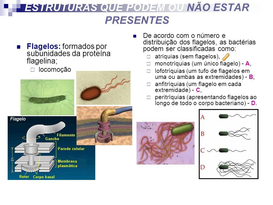 ESTRUTURAS QUE PODEM OU NÃO ESTAR PRESENTES Flagelos: formados por subunidades da proteína flagelina; locomoção De acordo com o número e distribuição