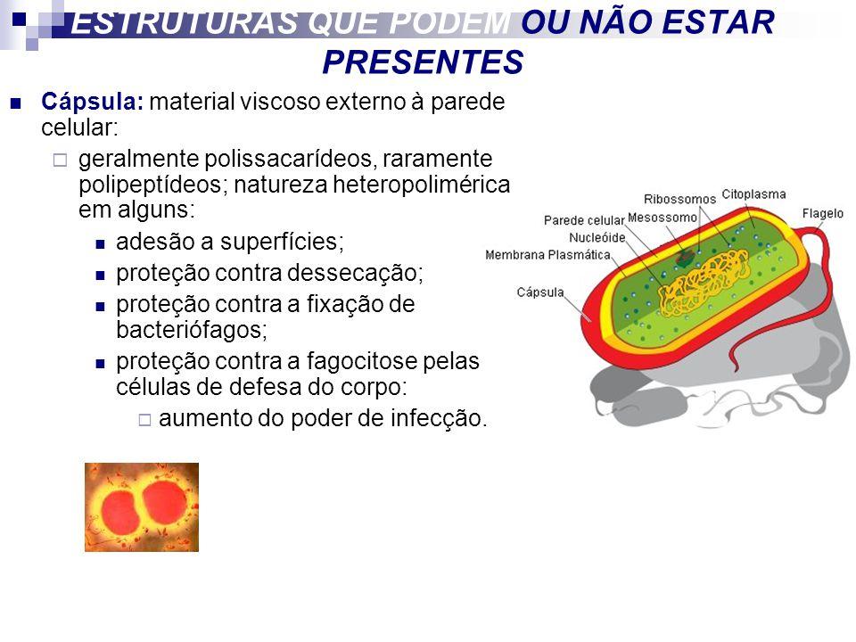 ESTRUTURAS QUE PODEM OU NÃO ESTAR PRESENTES Cápsula: material viscoso externo à parede celular: geralmente polissacarídeos, raramente polipeptídeos; n