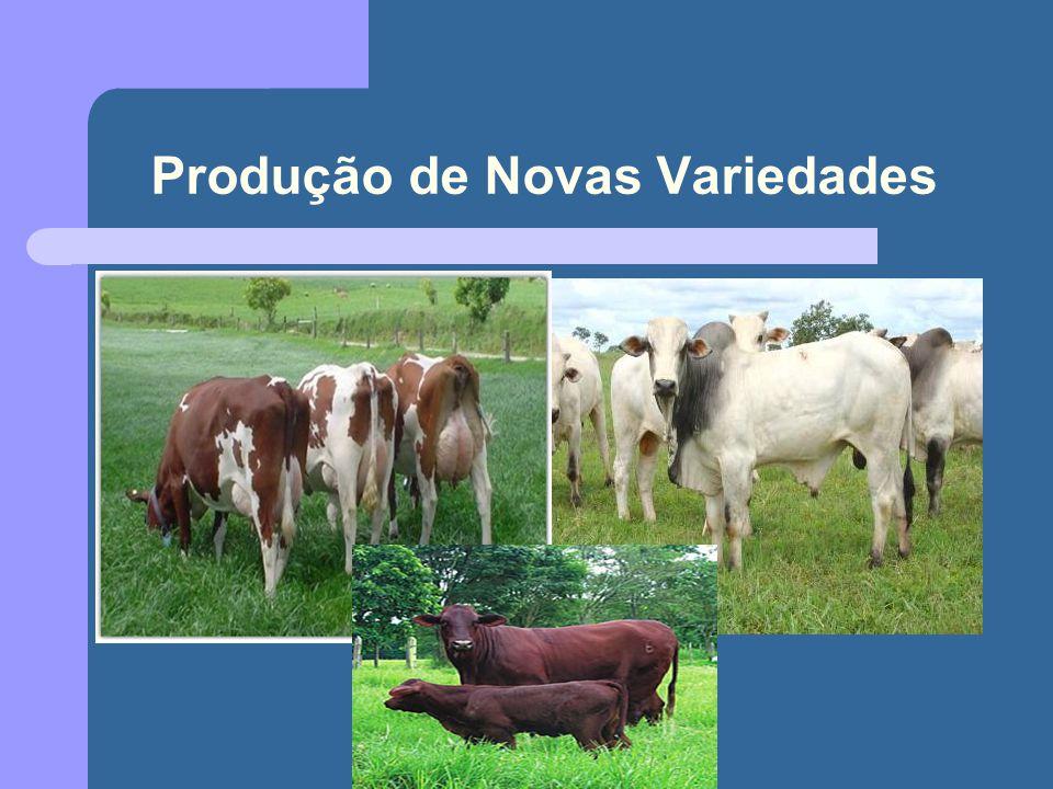 Alimentos transgênicos Aspectos positivos: Aumento na produção de alimentos.