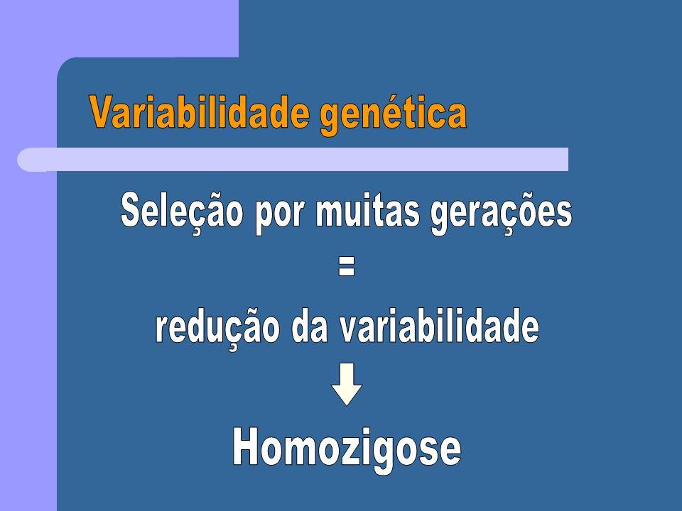 Passos para inclusão e exclusão de paternidade pelo DNA: 1)Compare as bandas da mãe (M), criança (C) e possíveis pais (P).