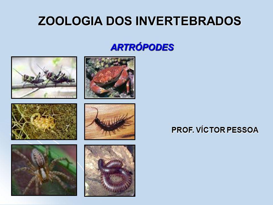 ZOOLOGIA DOS INVERTEBRADOS ARTRÓPODES PROF. VÍCTOR PESSOA