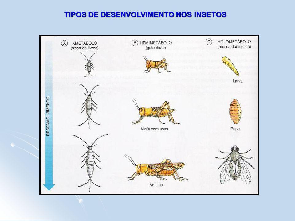 TIPOS DE DESENVOLVIMENTO NOS INSETOS