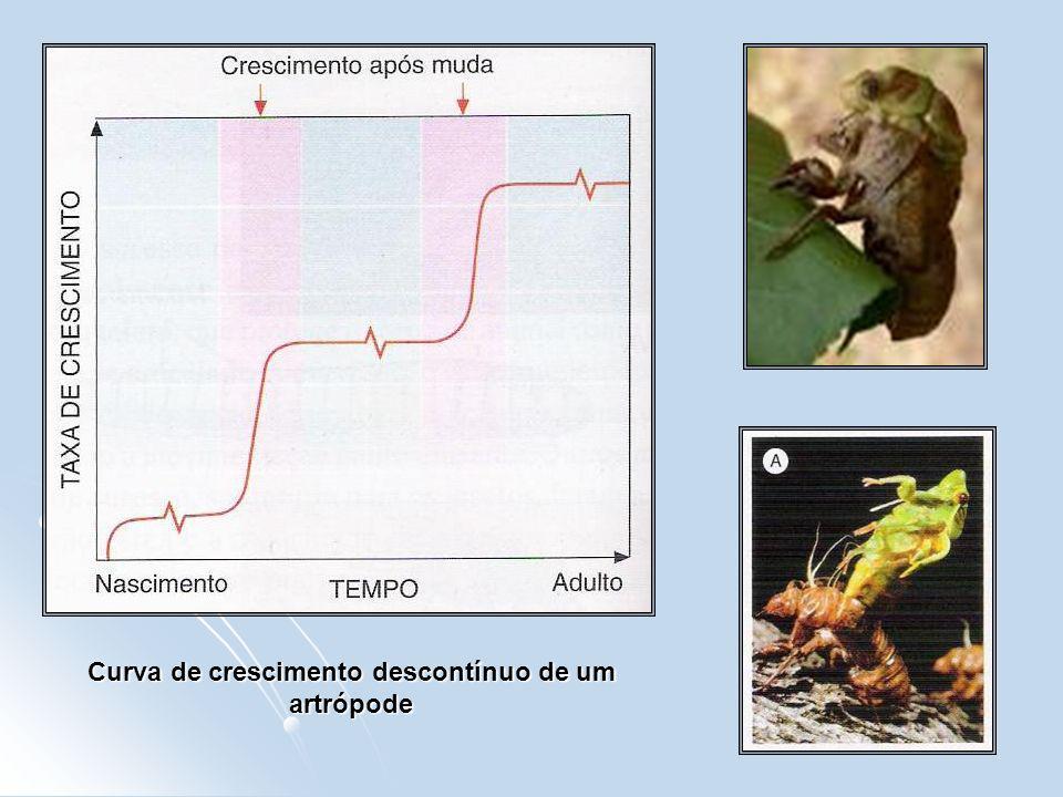 Curva de crescimento descontínuo de um artrópode