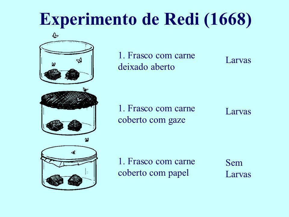 Francesco Redi (1626-1697) Médico italiano, mostrou, através de experimentos, que não haveria geração espontânea de insetos e ratos conforme acreditado anteriormente.