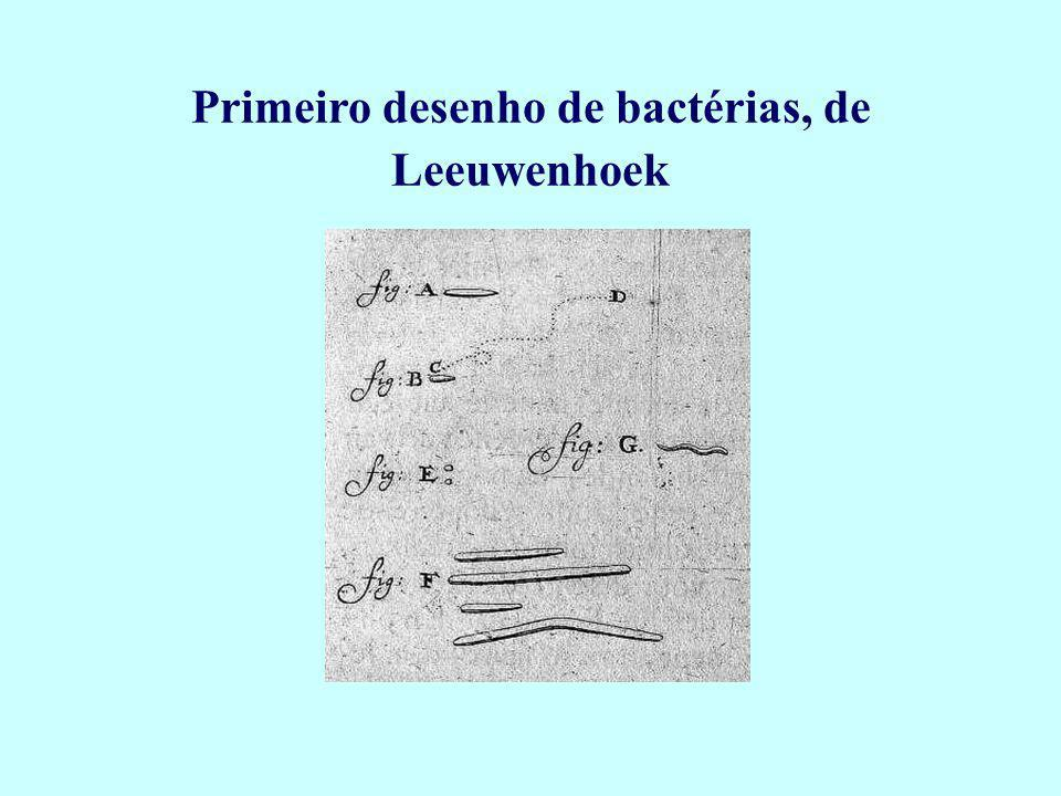 Anton van Leeuwenhoek (1632-1723) Comerciante holandês muito curioso, desconhecedor das teorias vigentes, descobriu as bactérias, protozoários, células do sangue, e muitos outros organismos microscópicos.