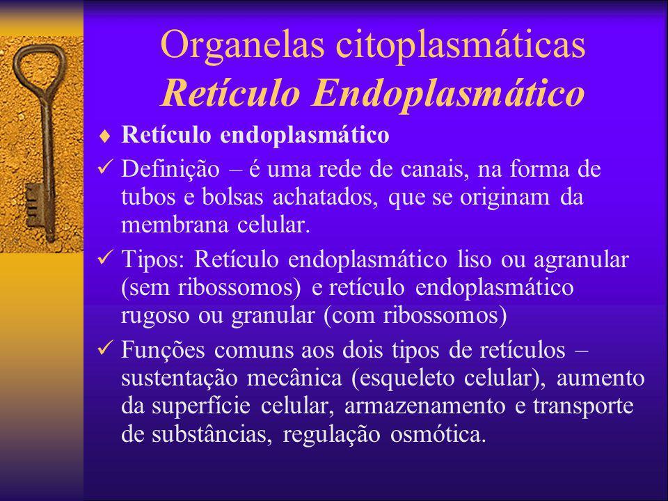 Organelas citoplasmáticas Retículo Endoplasmático Retículo endoplasmático Definição – é uma rede de canais, na forma de tubos e bolsas achatados, que