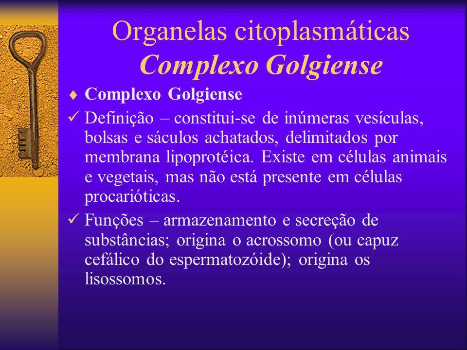 Organelas citoplasmáticas Complexo Golgiense Complexo Golgiense Definição – constitui-se de inúmeras vesículas, bolsas e sáculos achatados, delimitado