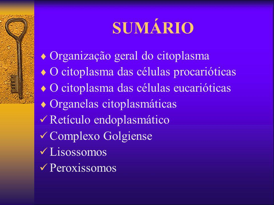 SUMÁRIO Organização geral do citoplasma O citoplasma das células procarióticas O citoplasma das células eucarióticas Organelas citoplasmáticas Retícul