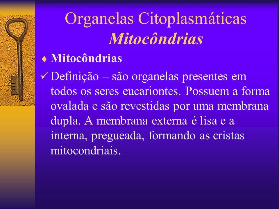 Organelas Citoplasmáticas Mitocôndrias Mitocôndrias Definição – são organelas presentes em todos os seres eucariontes. Possuem a forma ovalada e são r