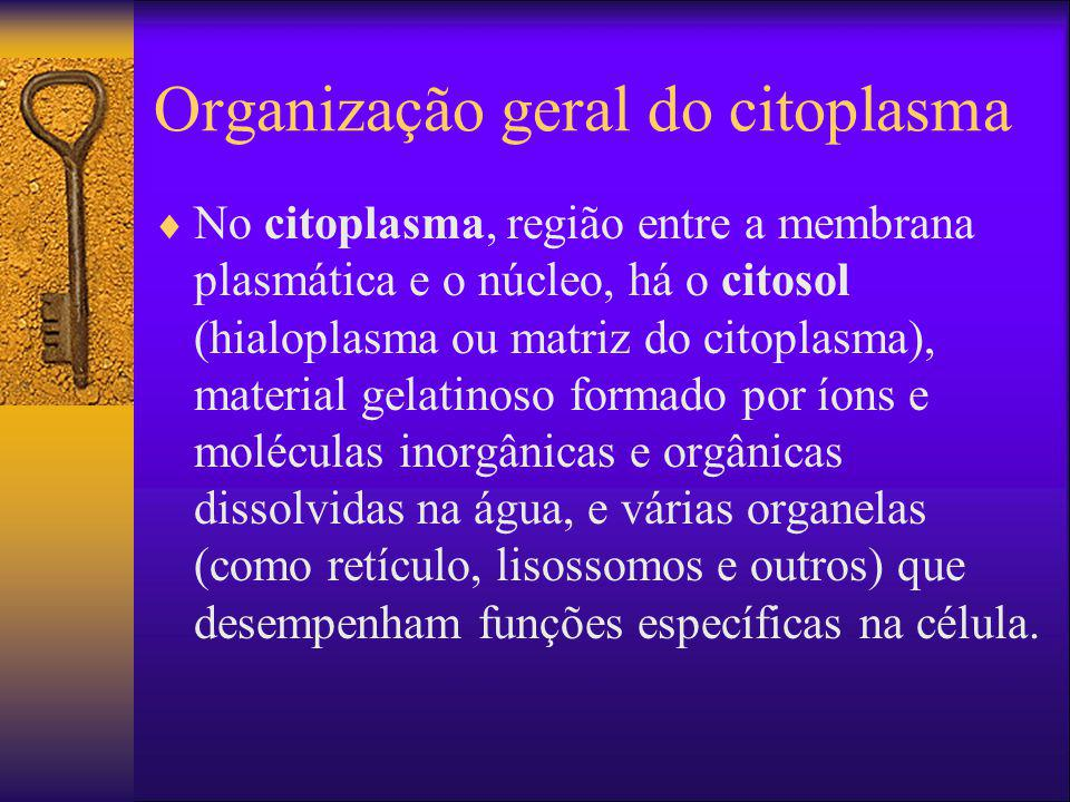 Organização geral do citoplasma No citoplasma, região entre a membrana plasmática e o núcleo, há o citosol (hialoplasma ou matriz do citoplasma), mate
