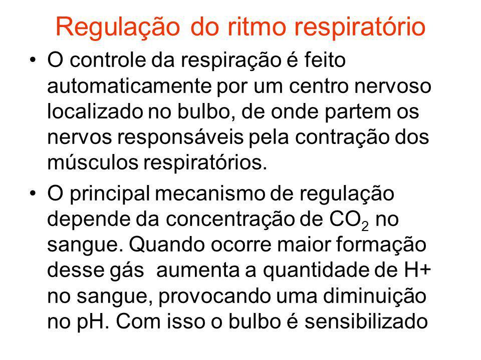 Regulação do ritmo respiratório O controle da respiração é feito automaticamente por um centro nervoso localizado no bulbo, de onde partem os nervos r