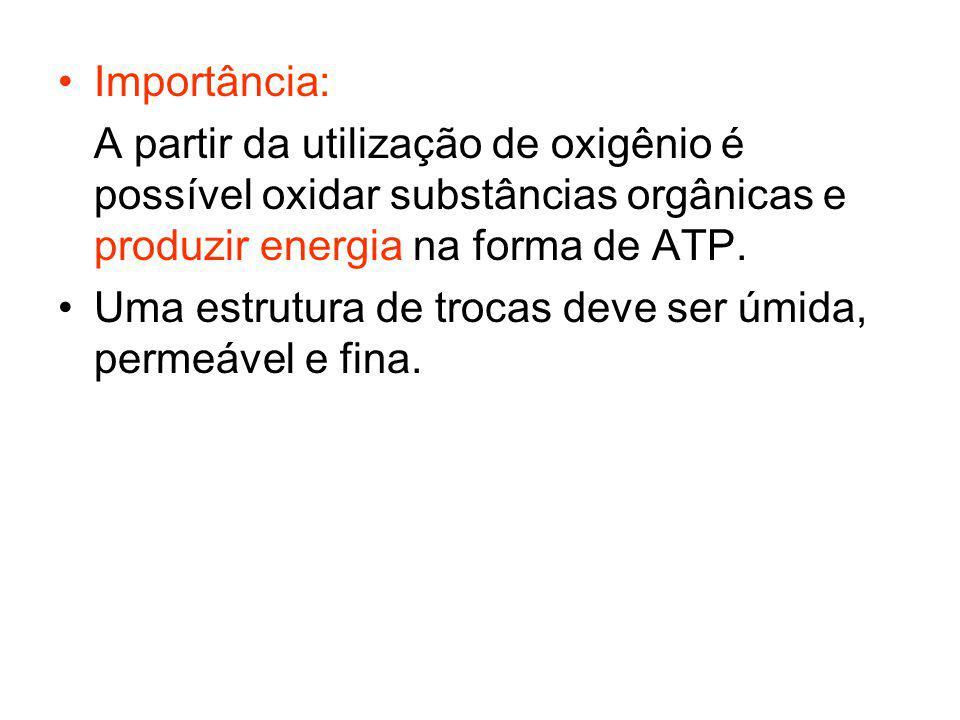 Importância: A partir da utilização de oxigênio é possível oxidar substâncias orgânicas e produzir energia na forma de ATP. Uma estrutura de trocas de