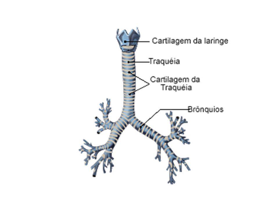 Problemas respiratórios Enfisema pulmonar: as fibras elásticas que são importantes na constituição dos alvéolos e bronquíolos perdem a elasticidade caracterizando a obstrução crônica do fluxo de ar, acompanhada por uma reação inflamatória.Grande parte causada por tabagismo.
