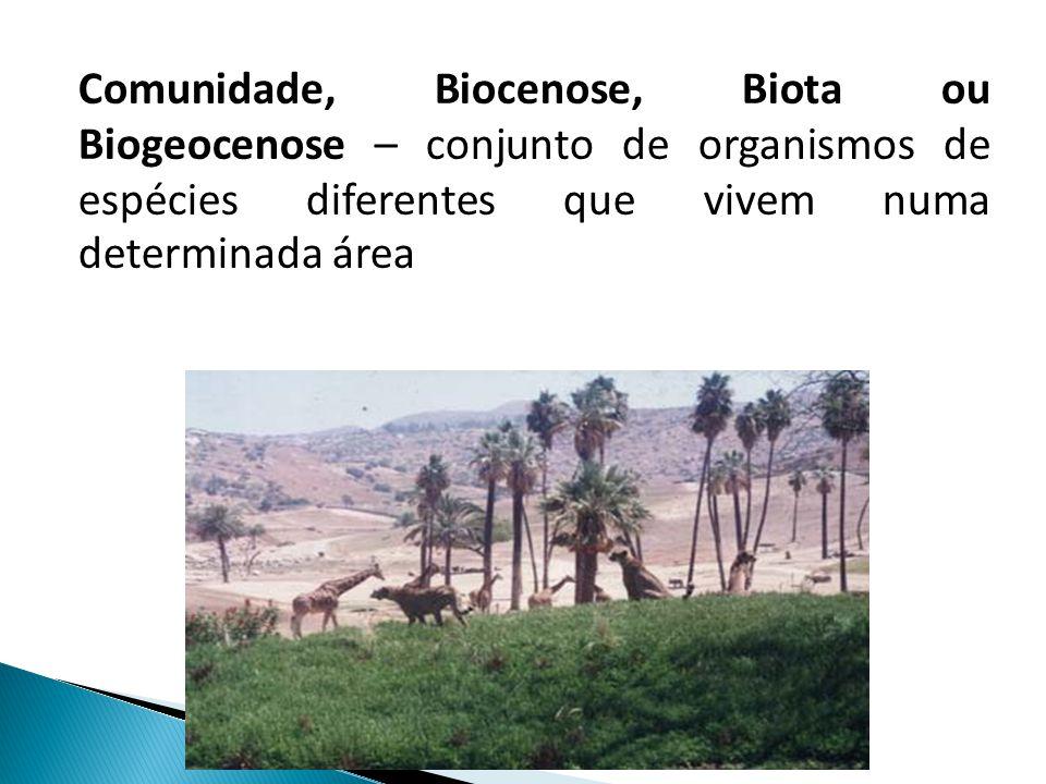 Comunidade, Biocenose, Biota ou Biogeocenose – conjunto de organismos de espécies diferentes que vivem numa determinada área