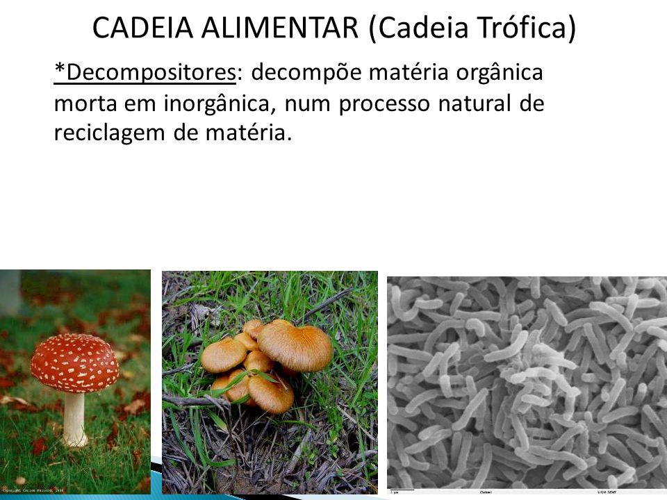 CADEIA ALIMENTAR (Cadeia Trófica) *Decompositores: decompõe matéria orgânica morta em inorgânica, num processo natural de reciclagem de matéria.