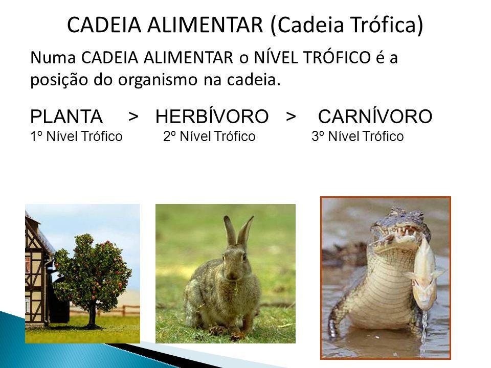 CADEIA ALIMENTAR (Cadeia Trófica) Numa CADEIA ALIMENTAR o NÍVEL TRÓFICO é a posição do organismo na cadeia. PLANTA > HERBÍVORO > CARNÍVORO 1º Nível Tr