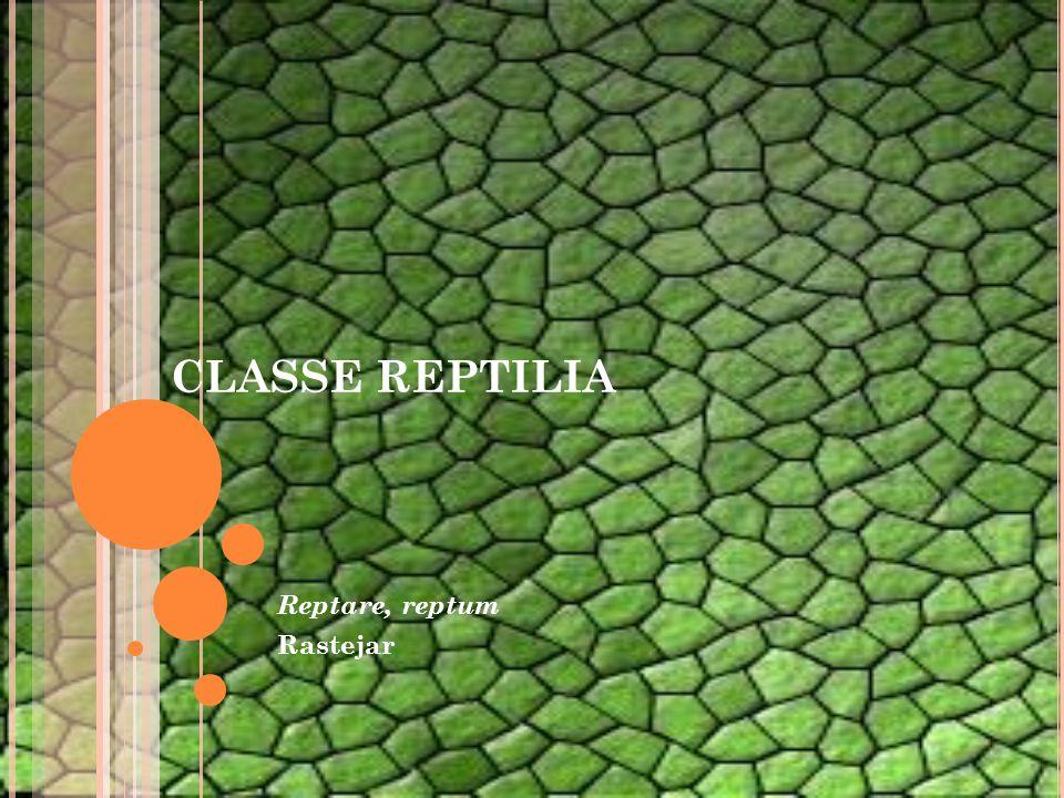 CLASSE REPTILIA Reptare, reptum Rastejar