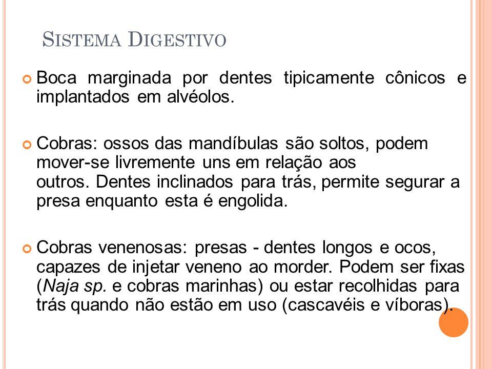S ISTEMA D IGESTIVO Boca marginada por dentes tipicamente cônicos e implantados em alvéolos.