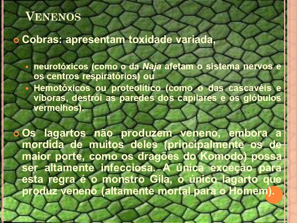 V ENENOS Cobras: apresentam toxidade variada, neurotóxicos (como o da Naja afetam o sistema nervos e os centros respiratórios) ou Hemotóxicos ou proteolítico (como o das cascavéis e víboras, destrói as paredes dos capilares e os glóbulos vermelhos).