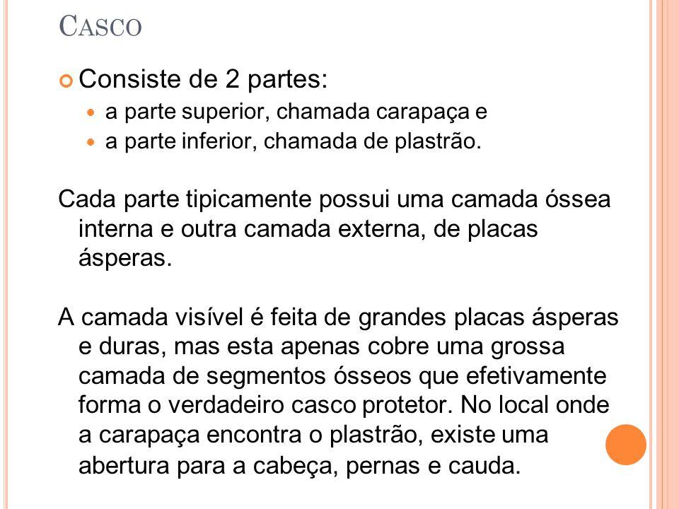 C ASCO Consiste de 2 partes: a parte superior, chamada carapaça e a parte inferior, chamada de plastrão.