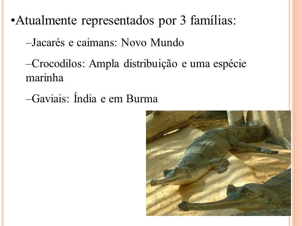 Atualmente representados por 3 famílias: –Jacarés e caimans: Novo Mundo –Crocodilos: Ampla distribuição e uma espécie marinha –Gaviais: Índia e em Burma