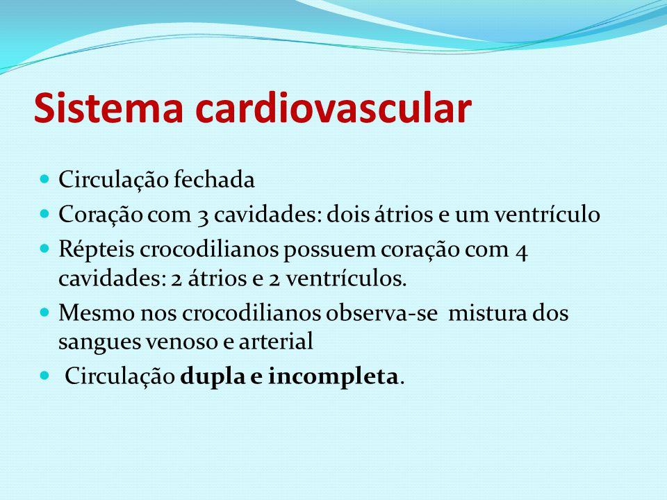 Sistema cardiovascular Circulação fechada Coração com 3 cavidades: dois átrios e um ventrículo Répteis crocodilianos possuem coração com 4 cavidades: