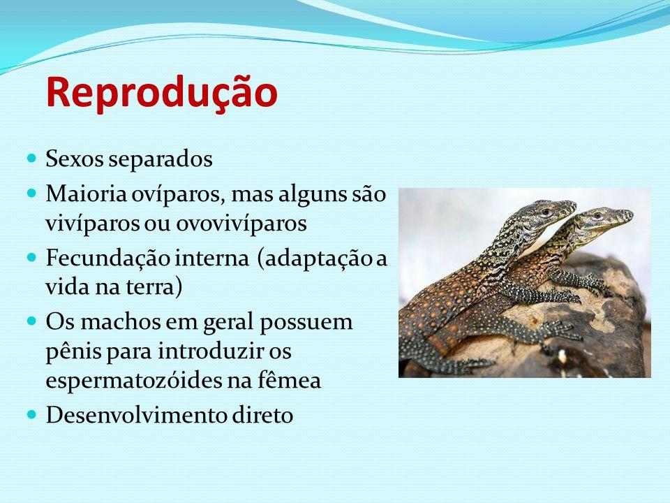 Reprodução Sexos separados Maioria ovíparos, mas alguns são vivíparos ou ovovivíparos Fecundação interna (adaptação a vida na terra) Os machos em gera