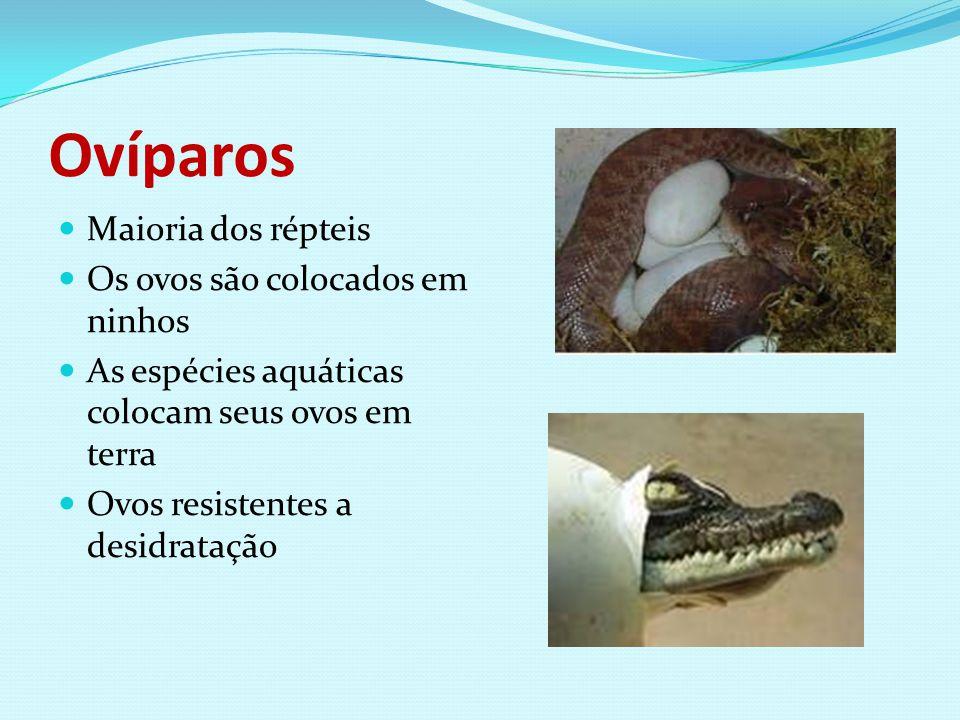 Ovíparos Maioria dos répteis Os ovos são colocados em ninhos As espécies aquáticas colocam seus ovos em terra Ovos resistentes a desidratação