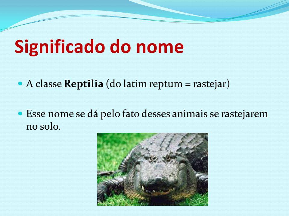 Significado do nome A classe Reptilia (do latim reptum = rastejar) Esse nome se dá pelo fato desses animais se rastejarem no solo.
