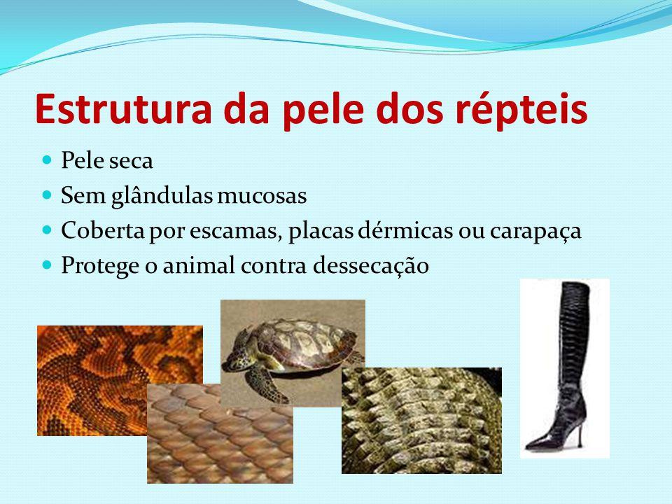 Estrutura da pele dos répteis Pele seca Sem glândulas mucosas Coberta por escamas, placas dérmicas ou carapaça Protege o animal contra dessecação