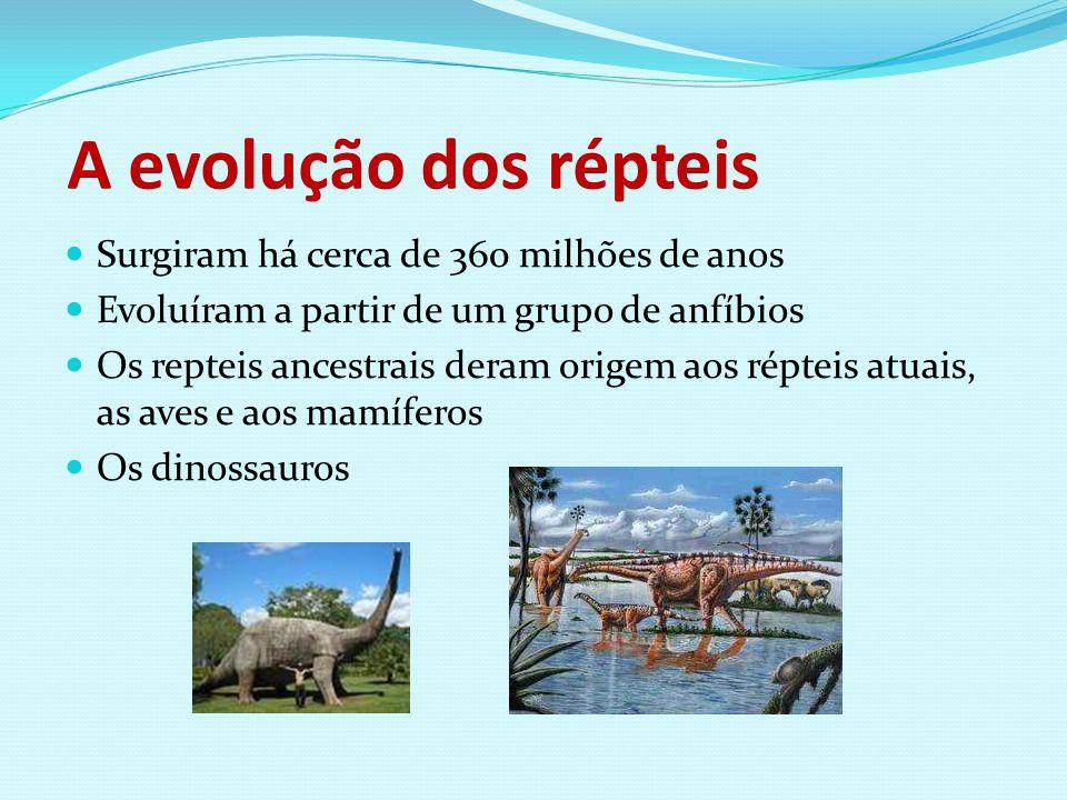 A evolução dos répteis Surgiram há cerca de 360 milhões de anos Evoluíram a partir de um grupo de anfíbios Os repteis ancestrais deram origem aos répt