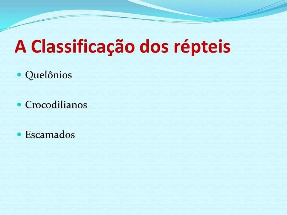 A Classificação dos répteis Quelônios Crocodilianos Escamados