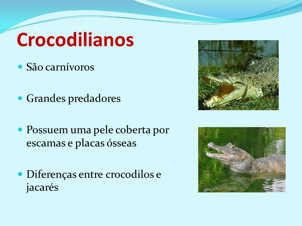 Crocodilianos São carnívoros Grandes predadores Possuem uma pele coberta por escamas e placas ósseas Diferenças entre crocodilos e jacarés