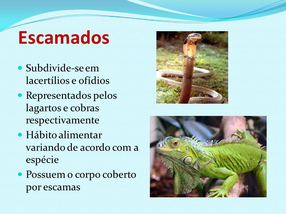 Escamados Subdivide-se em lacertílios e ofídios Representados pelos lagartos e cobras respectivamente Hábito alimentar variando de acordo com a espéci