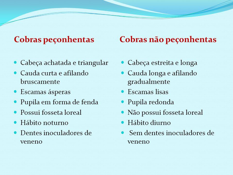 Cobras peçonhentas Cobras não peçonhentas Cabeça estreita e longa Cauda longa e afilando gradualmente Escamas lisas Pupila redonda Não possui fosseta