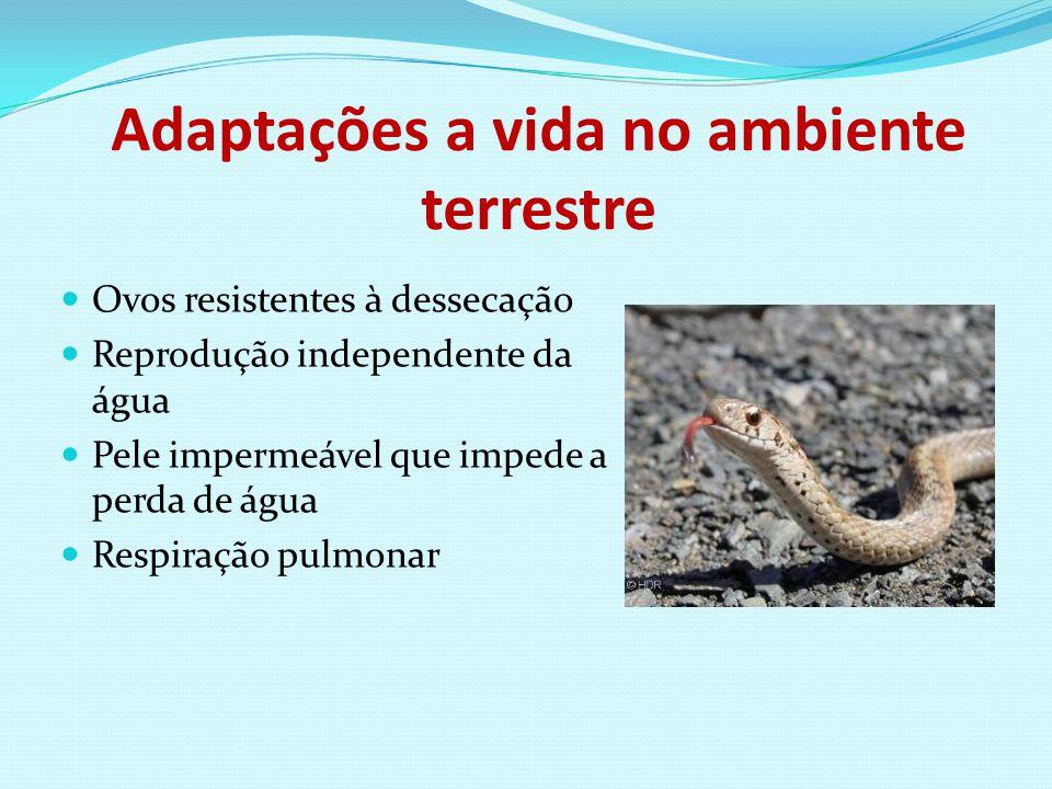 Adaptações a vida no ambiente terrestre Ovos resistentes à dessecação Reprodução independente da água Pele impermeável que impede a perda de água Resp