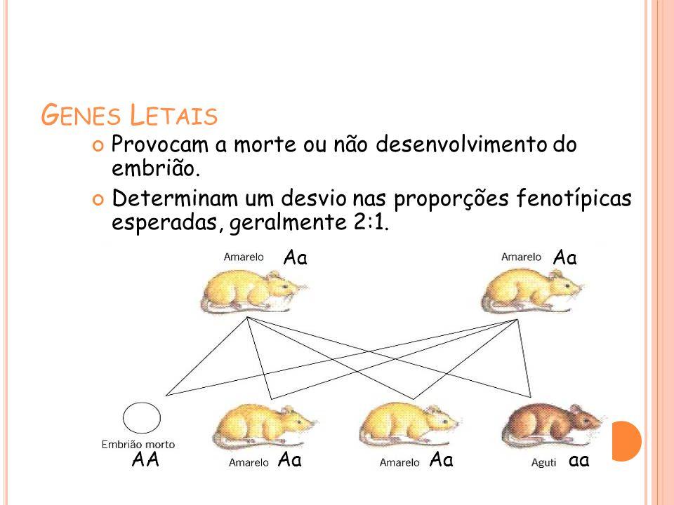 G ENES L ETAIS Provocam a morte ou não desenvolvimento do embrião. Determinam um desvio nas proporções fenotípicas esperadas, geralmente 2:1. Aa aaAA