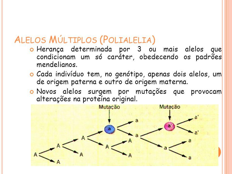 A LELOS M ÚLTIPLOS (P OLIALELIA ) Herança determinada por 3 ou mais alelos que condicionam um só caráter, obedecendo os padrões mendelianos. Cada indi