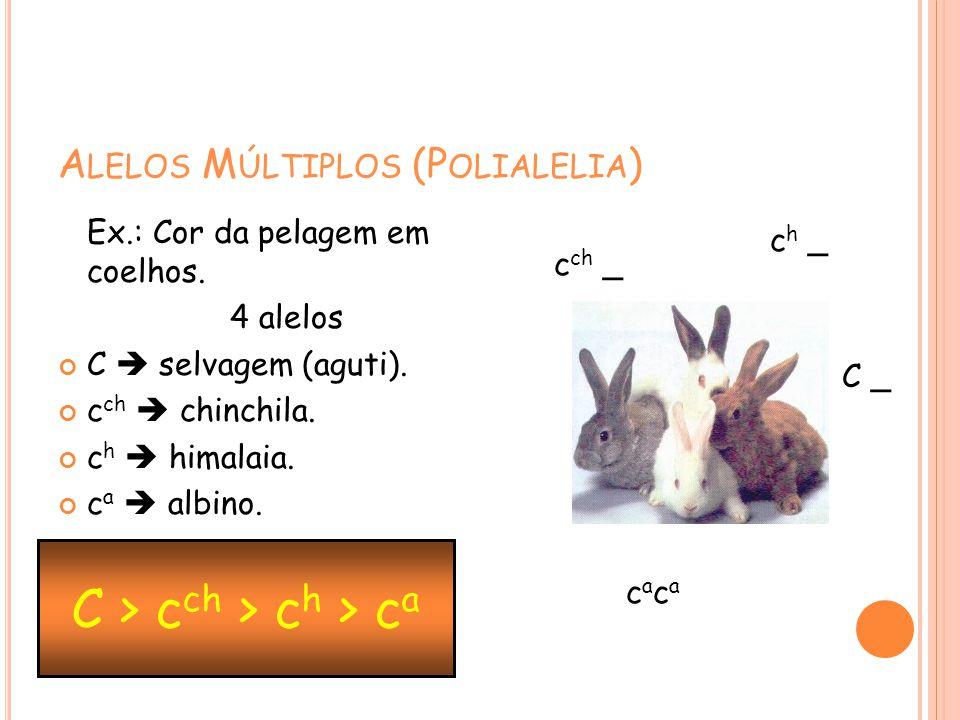 A LELOS M ÚLTIPLOS (P OLIALELIA ) Ex.: Cor da pelagem em coelhos. 4 alelos C selvagem (aguti). c ch chinchila. c h himalaia. c a albino. C > c ch > c