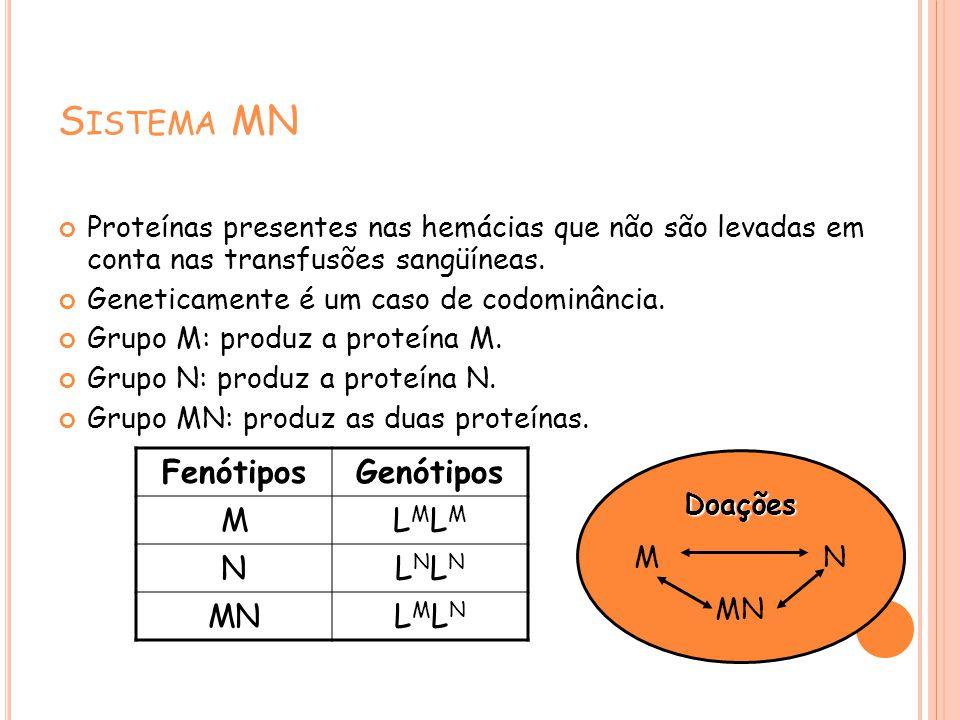 S ISTEMA MN Proteínas presentes nas hemácias que não são levadas em conta nas transfusões sangüíneas. Geneticamente é um caso de codominância. Grupo M
